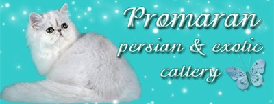 PROMARAN cattery - Persian, Exotic